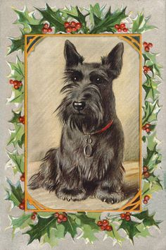 Scottish Terrier Dog 1930s Lucy Dawson Mac New Large Blank Christmas Note Cards | eBay