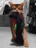 12 Cat Burglars Who Got Caught On Camera #refinery29  http://www.refinery29.com/the-dodo/156
