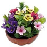 Pansy Mixed Floral Arrangement
