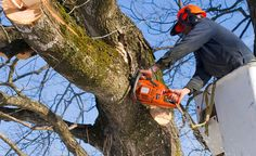 We are a premier tree removal company with knowledge and expertise to handle any large or small project. We have all the necessary equipment and resources to properly remove a tree and work carefully to avoid any damage to your property.
