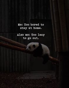 The Random Vibez gets you the top collection favorite, Happy Weekend Quotes, sayings, images and wishes for you to relax and smile in the weekend! One Life Quotes, Lazy Quotes, Me Quotes Funny, Weekend Quotes, Karma Quotes, Funny Picture Quotes, Jokes Quotes, Reality Quotes, Cute Quotes