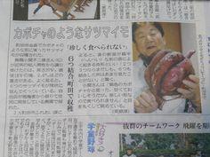 11月9日@onodekita 昨日の東京新聞の朝刊からサツマイモ6本の結合