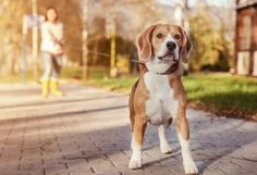 3 ways owning a pet can lead to a healthier heart