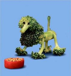 Broccoli Dog :-) >> FUN!