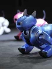 A Pisa studenti dall'Italia per la Robofesta. Il 19 gennaio i robot progettati dai ragazzi nell'evento organizzato dall'Istituto di Biorobotica della Scuola Superiore Sant'Anna.
