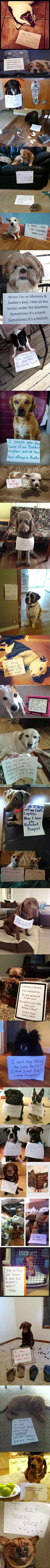 F u start stopping dog shaming or any animal shaming Cute Funny Animals, Funny Animal Pictures, Funny Cute, Funny Dogs, Super Funny, Funny Dog Shaming, Dog Shaming Photos, Cute Puppies, Cute Dogs