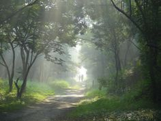 Another one in series on morning at Taljai Hill in Pune