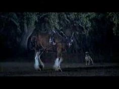 Budweiser Clydesdale Team Super bowl XLII Commercial ad 2008