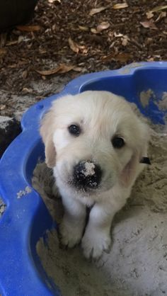 When this goof made the sandbox a million times cuter. | 37 Times Golden…
