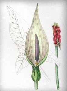Balandžio 28 diena. Balandžio 28 dienos gėlė, vardadieniai ir šventės. Balandžio 28 dienos darbai sode ir darže.