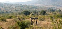 Bakubung Bush Walks brings you closer to nature. Sun City, Closer To Nature, Hotels And Resorts, Lodges, Walks, Serenity, National Parks, Places, Travel