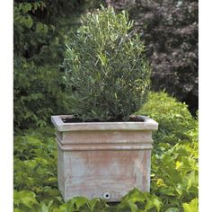 Terra Cotta Square Manarola Square Planter - Set of 3 - Indoor Planters at Simply Planters