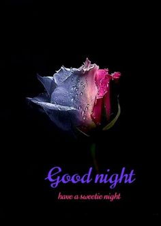 Good Night Wishes, Good Night Sweet Dreams, Good Night Quotes, Beautiful Love Images, Good Night Image, Black And White Portraits, Good Morning, Feelings, Sd