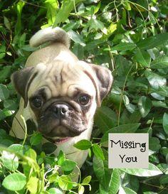 Ellie Pug's Missing Somebody...