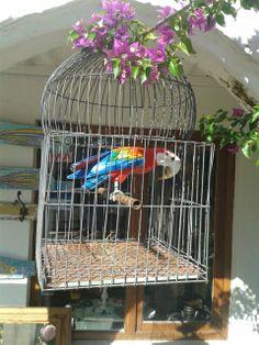 Para darle color a tu galeria o jardín.  Antigua jaula con papagallo en madera. Te esperamos.