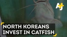 Let them eat catfish: North Korea amps up catfish production amid talks of sanct #news #alternativenews