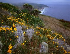 point reyes | Point Reyes National Seashore; California; Marin County California