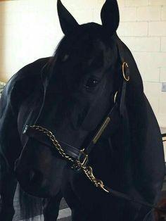 Horses And Dogs, Cute Horses, Pretty Horses, Horse Love, Beautiful Horses, Animals Beautiful, Animals And Pets, Cute Animals, Wild Horses