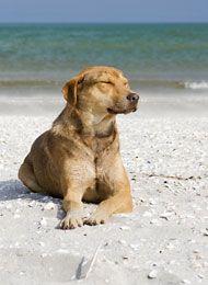 Hundestrände an Nord- und Ostsee