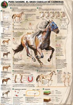 Infographics news: Hand drawing and infographics: when hands are used for more than moving the mouse Animals Of The World, Animals And Pets, Courses Hippiques, Inspirational Horse Quotes, Horse Anatomy, Nature Posters, Thoroughbred Horse, Horse Drawings, Equine Art