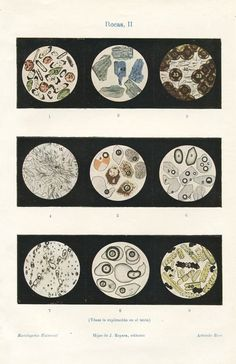 1920s Rocks under a Microscope. Scientific Illustration, Vintage Print Geology