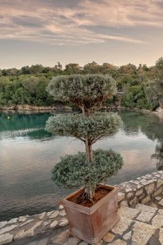 Architects, Landscape Design at Meganisi Island, Ionian Islands, Greece 🏘🏗🗺🏖 Landscape Design, Architects, Islands, Greece, Water, Outdoor, Greece Country, Gripe Water, Outdoors