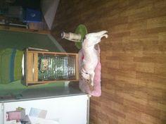 Doggy yoga!?