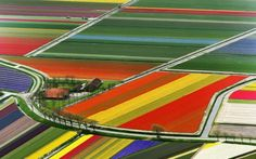 I think this may have been taken in Anacortes, WA during the tulip season.  There are miles and miles of tulips planted in rows like this.