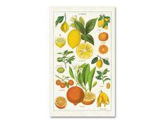 Cavallini & Co. Braun Design, Fruit, Vibrant Colors, The Fruit