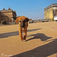 The little puppy My travel to India and Nepal  #vacation #nepal #india  #artist  #followme #garden #market #follow #temple #backpacker #instagramer #artwork #selfie #de#foodlover #exploring #objects #hero4 #details #streetstyle #streetphoto #nature #outdoor  #discovering #travel #aventure #gopro #iphoto #wordtraveler #puppy