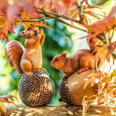 Acorn & Conker the Nut Loving Red Squirrel Garden Ornaments Animal Garden Ornaments, Conkers, Red Squirrel, Animal Design, Dream Garden, Acorn, Traditional Design, Garden Inspiration, Garden Design