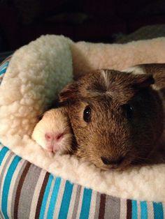 Snuggle piggies
