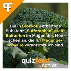 """Die in Brokkoli enthaltene Substanz """"Sulforaphan"""" greift Bakterien im Magen des Menschen an, die für Magengeschwüre verantwortlich sind. Immer fleißig Brokkoli essen!  Folge @quizfeed - 'Wissen clever verpackt!'"""