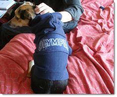 DIY Dog Fashions- Repurpose Old Sweaters & Shirts to Make Cheap, Attractive Dog Winter Clothes & Raincoats. http://www.frugal-cafe.com/pets/articles/diy-how-to-make-dog-clothes-fashions-recycled-clothing.html