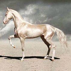"44 Likes, 3 Comments - deborah (@her_name_is_deborah) on Instagram: ""horseplay RG @wrenarthur  #loveletters #horses #creaturesgreatandsmall #beautifulcreatures #beauty…"""