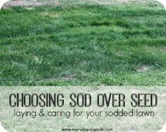 choosing sod over seed: caring for your sodded lawn