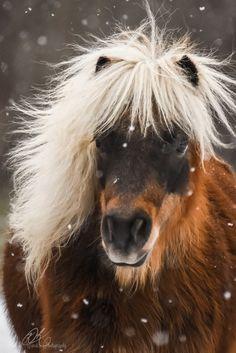 Красивые Лошади, Маленькие Жеребята, Мини Лошади, Лошади, Лошади, Природа, Животные, Фотографии Лошадей
