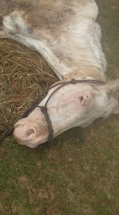Demand Felony Abuse Charges and the Maximum Penalty for the Abuser Charles Blanks, that cause the deaths of 3 horses. Join the campaign and make a difference.