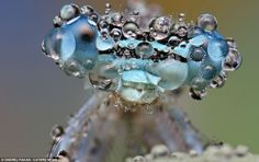 Ondrej Pakan, from Myjava, Slovakia, captured the stunning series of microscopic insects following a downpour.