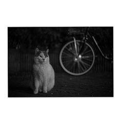 Totoro March 2015 #cat #totoro #blackandwhitephotography