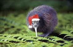 Merry Christmas New Zealand friends & family ♥