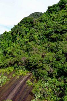 Rio de Janeiro, c'est aussi la Mata Atlantica, cette végétation tropicale dense qui habille les montagnes d'un superbe manteau vert. La nature y est reine et offre un spectacle sonore dépaysant.