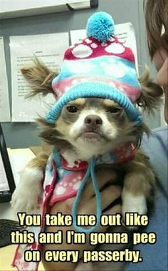 Dump A Day Funny Animal Pictures Of The Day - 21 Pics
