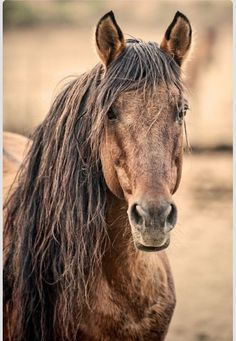 Unspoken words are spoken between a horse and rider not through words, but through actions.