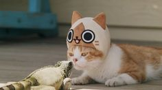 """Hunting Ban Lifted! Kitty Airou is the Cutest Scaredy-Cat in This Commercial, """"I am Airou""""!"""