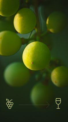 ↑↑TAP AND GET THE FREE APP! Lockscreens Art Creative Grape Berries Food Summer Wine HD iPhone 5 Lock Screen