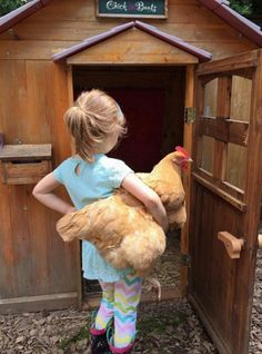 """Raising a flock of backyard chickens as pets with """"benefits"""" is a fun, fulfilling activity that the whole family can get involved in."""
