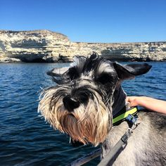 On the boat ✌️ #dog #schnauzer #travelwithdog #lovenature #sea #ontheboat #crimea #photodog