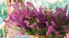 I když je zázvor exotická rostlina, je na pěstování neuvěřitelně nenáročná. Plants