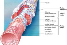 1000 Images About Lymphatic Drainage Massage Therapy On